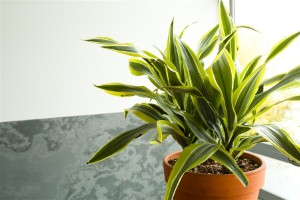 How to pack your houseplants for a move.