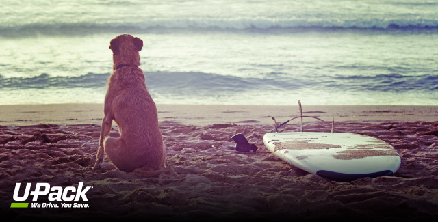 Learn about the steps to take when moving a dog to Hawaii