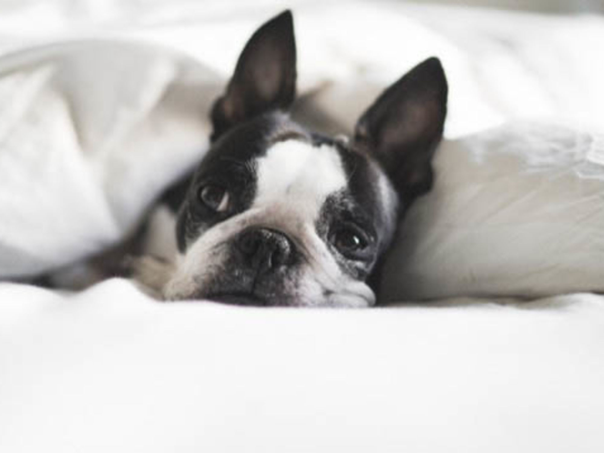 Things To Know About Moving Pets To Canada U Pack
